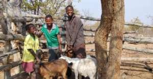Goats - Uganda