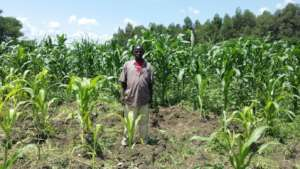 Manny in His Maize Garden