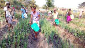 Growing crops in our shamba (vegetable garden)