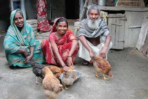 Home farmers on our poultry programme