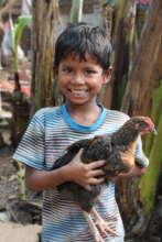 Boy holding hen