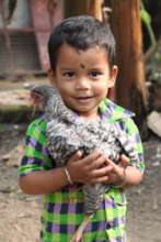 Young child holding hen