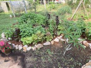 Basil, lettuce, sage, oregano, thyme and more!