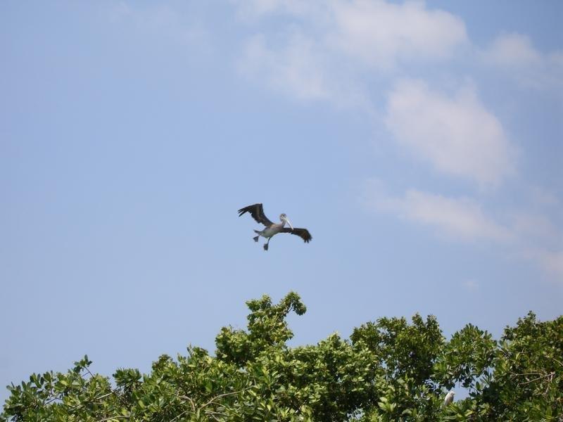 Help Preserve Biodiversity in Port Royal, Jamaica