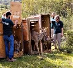 Zoo staff members release deer into the wild