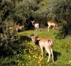 The deer enjoy the beautiful Spring habitat