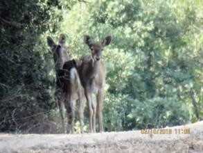 Wild born deer sighted!