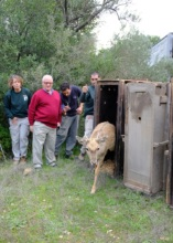 Happy onlookers see a deer released into the wild