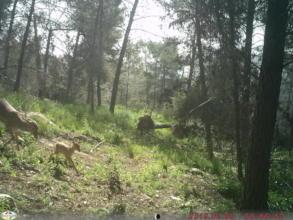 Forest camera capture