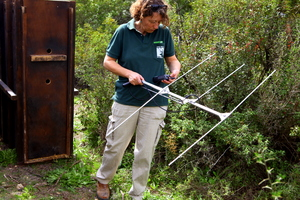 Tracking Deer with a Radio Telemetry Transmitter