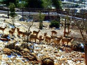 Winter in the Zoo's Biblelands Wildlife Preserve