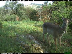 Daylight image from monitoring camera