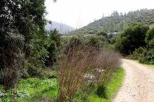 The Nahal Soreq River Nature Reserve