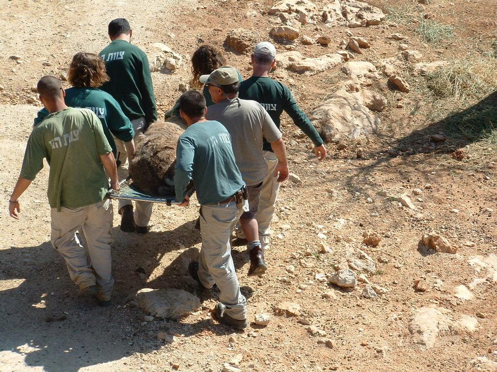 Bringing Biblical Deer to the Holy Land