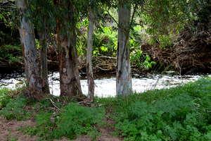 The river at Nahal Soreq