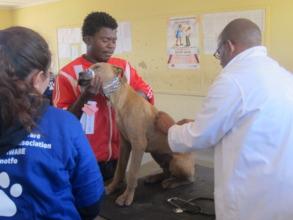 Medical checks before surgery