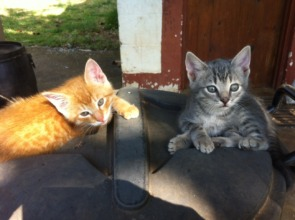 Meet Ginger and Griffin