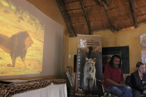 Presentation about the state of the Kalahari lion