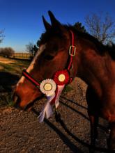 Won a ribbon at a local show