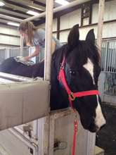 Hershey at the vet