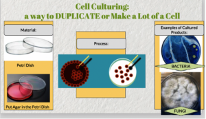 Learning about Cell Culture!