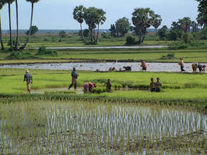 Cambodian Rice Paddy and Fishery