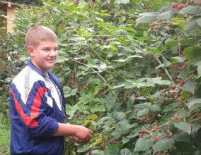Petar, picking blackberries to help the family
