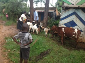 Alice showing her economic activity/goats