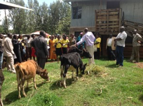 Einray, livestock officer answering questions