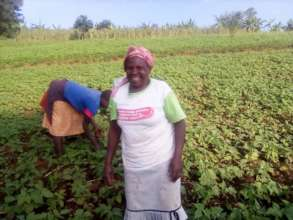 Martha at her farm where she planted maize & beans