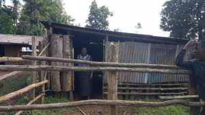Martha at her new cow shed