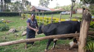 Martha with one of her cows after decision to cull