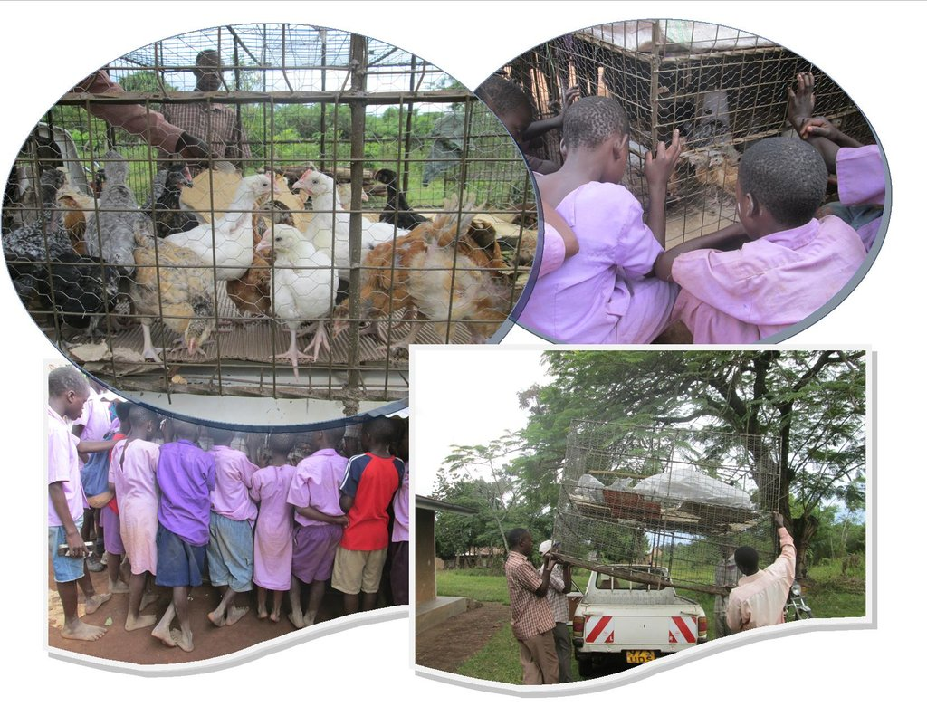 Caged Poultry Keeping for Child Education Support