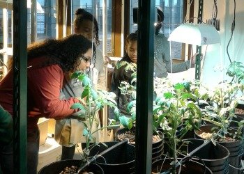 Help Teens Promote Healthy Food Access in NYC