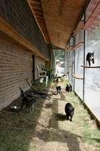 HSDC-DKC Shelter Cat Patio