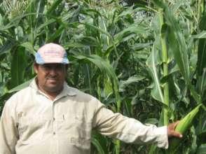 Nicaragua corn farmer.