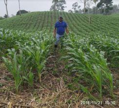 Co-op member, Ariel, in his maize field.