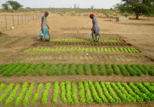 With water, women can grow lettuce year-round