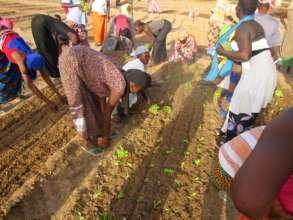Technicians teach women to transplant seedlings