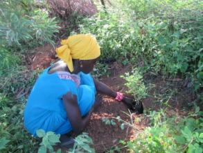 Cooperative members plant 1000s of tree seedlings