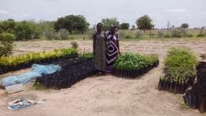 Thriving tree seedlings in the Darou Diadji garden
