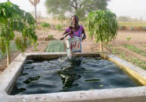 Gathering water from a basin in the Walo garden