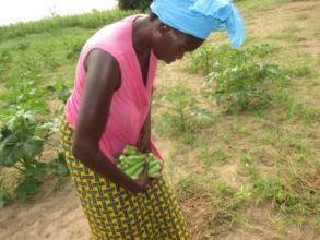 Harvesting okra in the Gagnick Mack garden