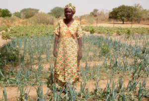 A thriving onion bed in Darou Diadji