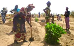 Seynabou helps prepare garden beds for planting