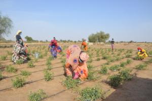 Women farming while socially distanced