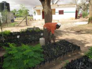 Seedlings are planted throughout the village