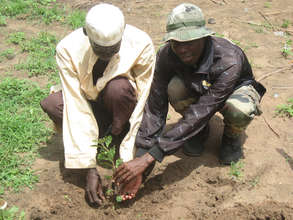 The communities have planted hundreds of trees
