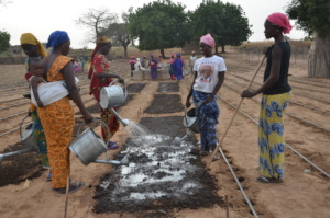 Women in Mbossedji watering their garden plots