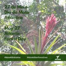 Atlantic Forest Day